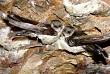 Côn Đảo mùa chim yến làm tổ