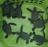 Côn Đảo chú trọng bảo tồn thiên nhiên