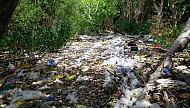 Côn Đảo ngập rác, kiểm lâm dọn không xuể