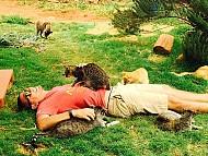 Lanai - Thiên đường mèo ở Hawaii