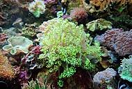 Quy hoạch Côn Đảo thành khu du lịch sinh thái biển đảo đặc sắc