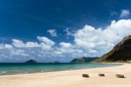 Rùa Biển Liên Tiếp Đẻ Trứng Trên Bãi Biển Ở Côn Đảo