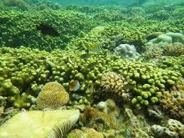 Khám phá rạn san hô tuyệt đẹp ở Côn Đảo