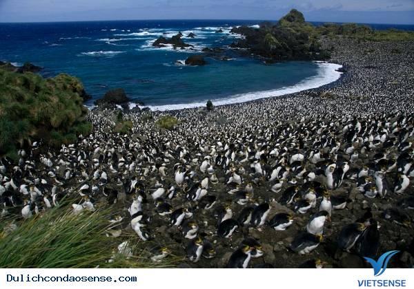 Những Hòn Đảo Thiên Đường cho động vật trên thế giới