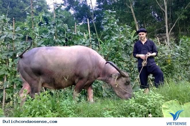 Trải nghiệm chăn trâu bắt cá ở Thái Nguyên của Du Khách